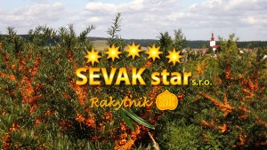 Logo SEVAK
