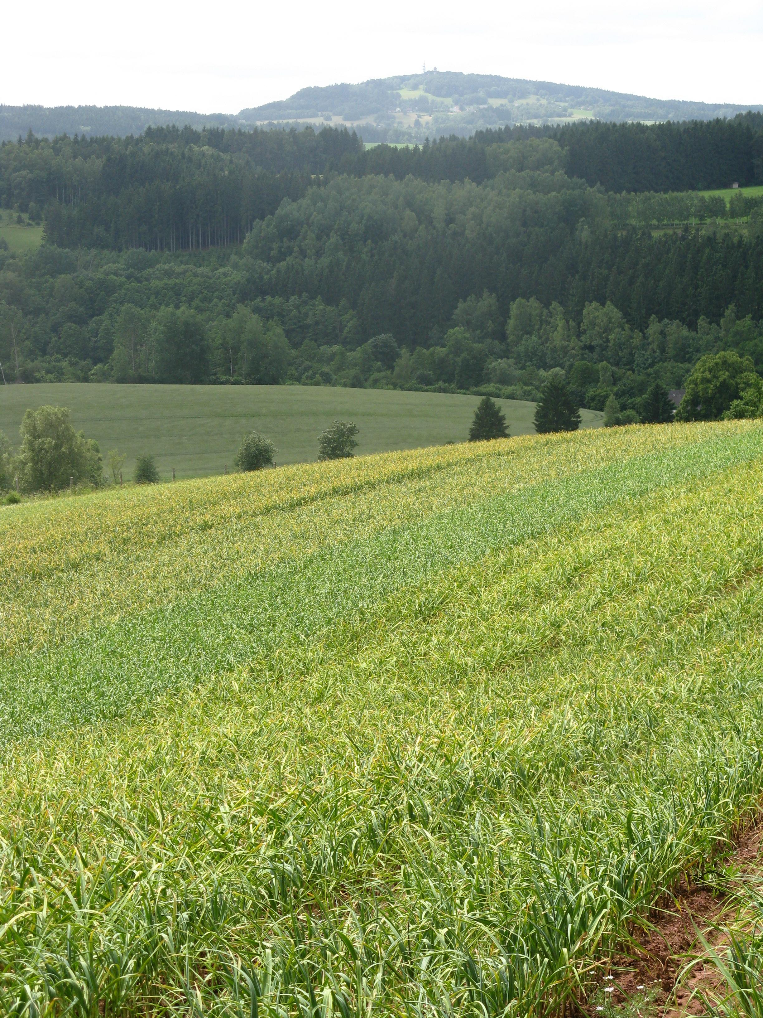 Značka Pěstování česneku